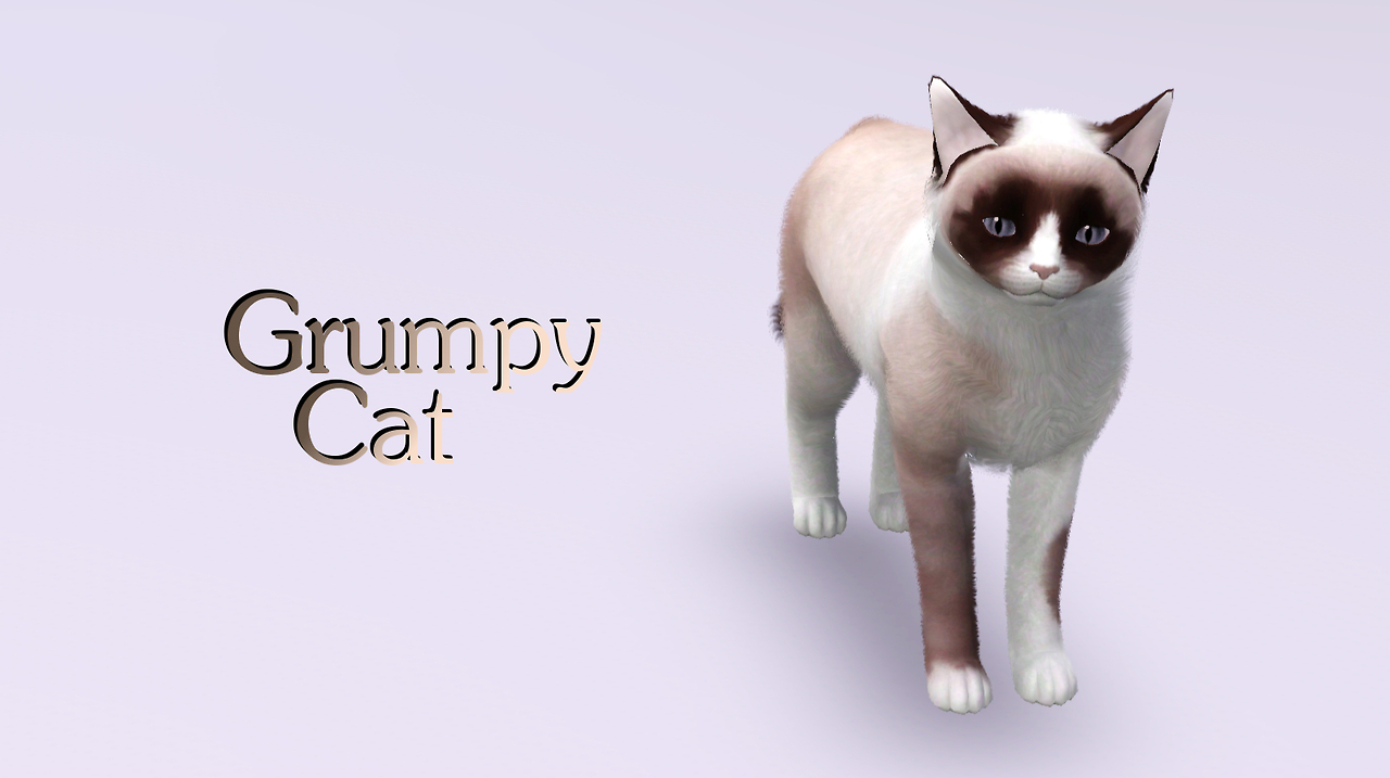 Grumpy Cat by Catlover