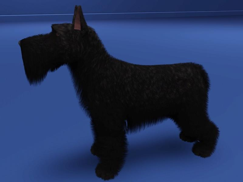 Scottish Terrier by LizardDaughter