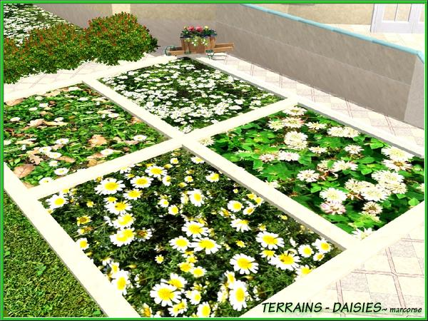 Terrains-Daisies by Marcorse