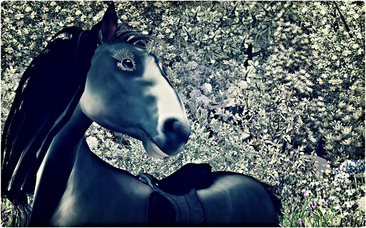 Crying Eye horse by Petka
