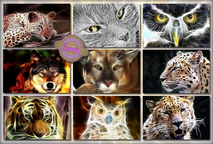 Animal Arts by Cassie