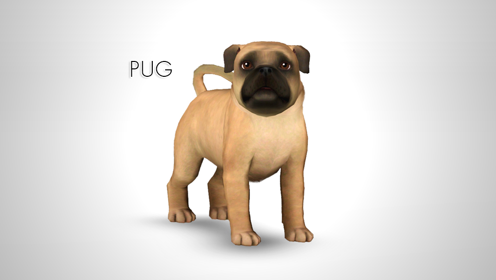 Improved Pug by morganabanana