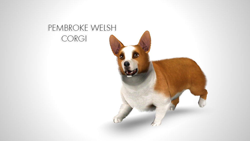 Pembroke Welsh Corgi by Morganabanana