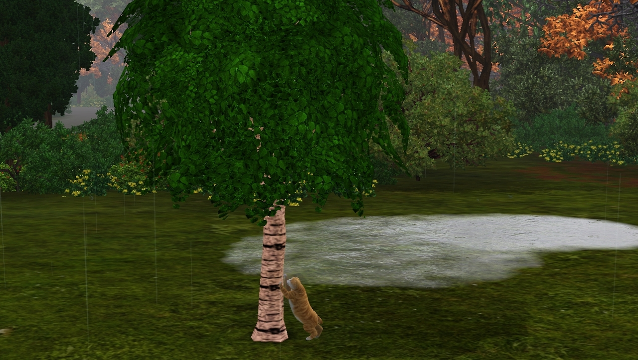 Scratching Tree by sims3tavern