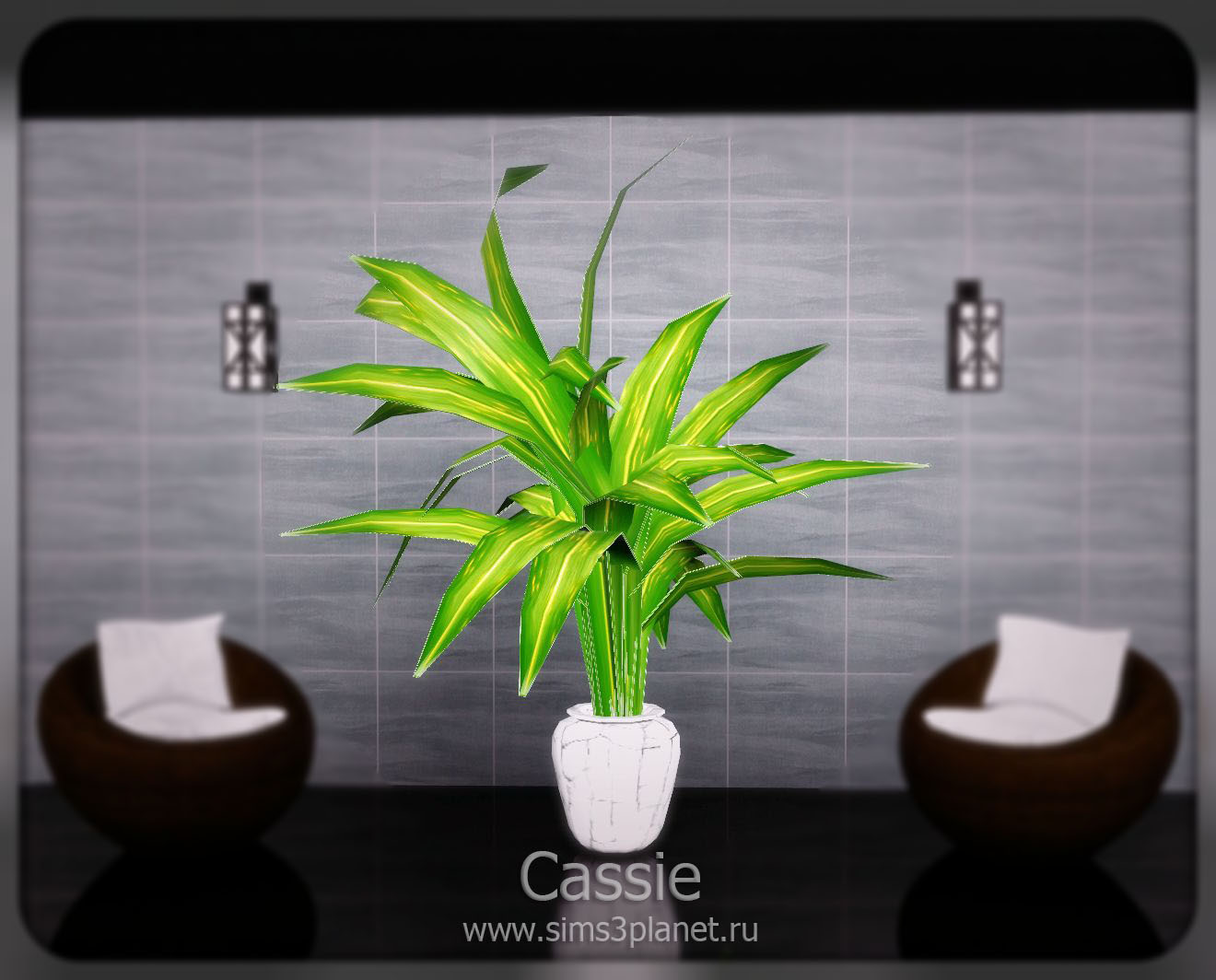 Big plant conversion by Cassie