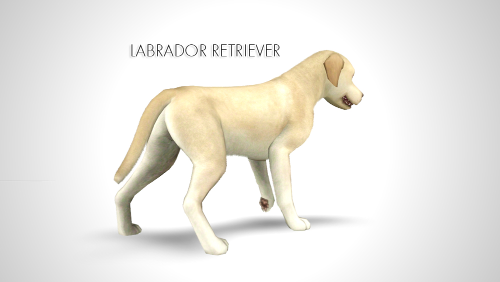 Labrador Retriever by Morganabananasims