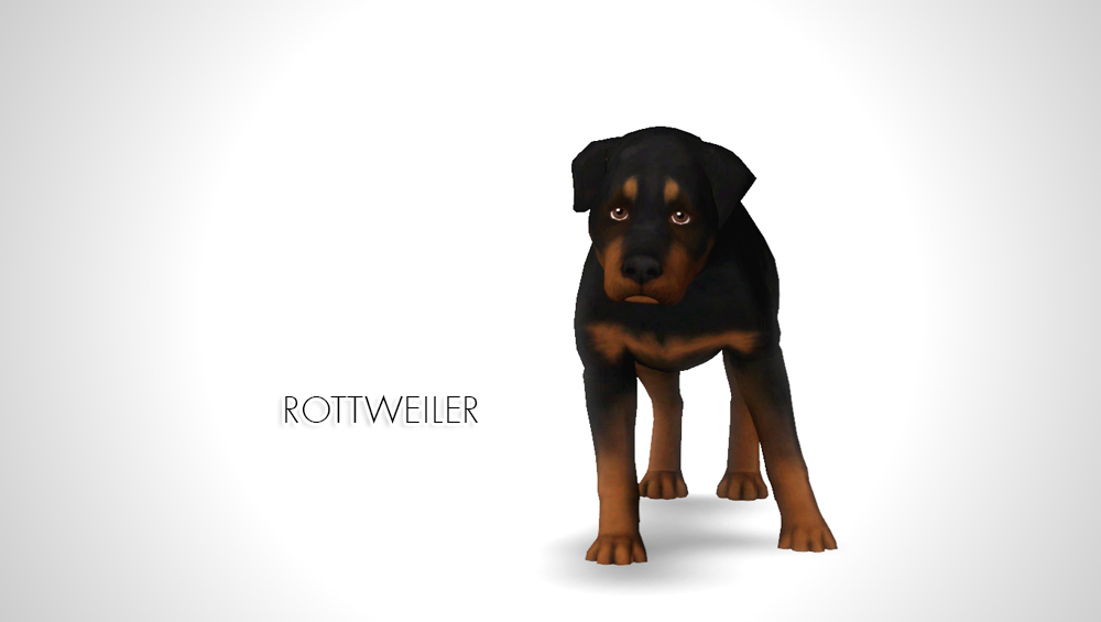 Improved Rottweiler by morganabananasims