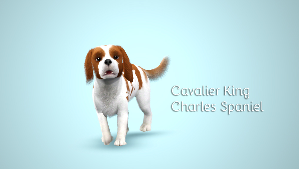 Cavalier King Charles Spaniel by Morganabanana