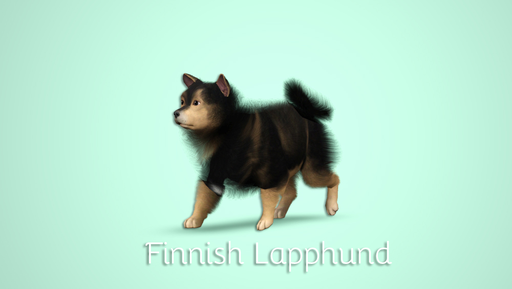 Finnish Lapphund by morganabananasims