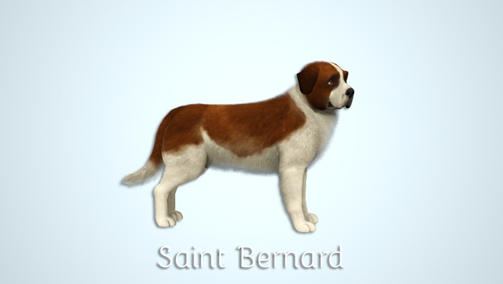 Saint Bernard by Morganabananasims