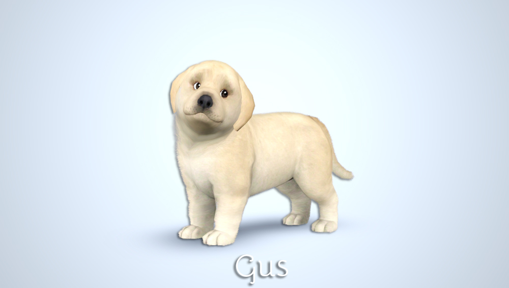 Gus - Golden Retriever Puppy by Morganabananasims