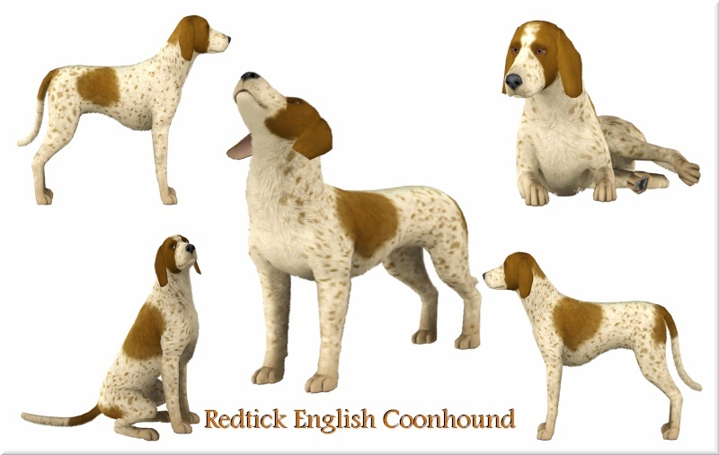Falcon The Redtick English Coonhound by Jacks Creations