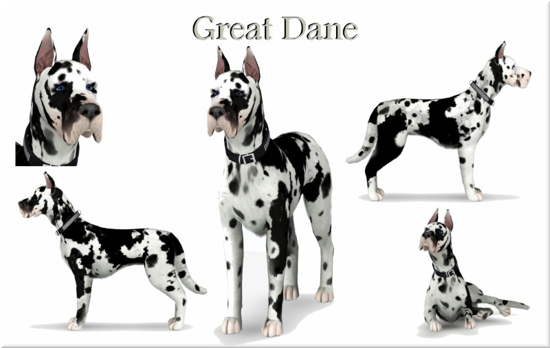 Great Dane by Jacks Creations
