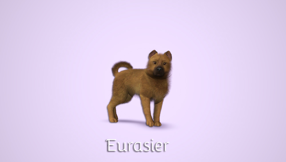 Eurasier by Morganabananasims