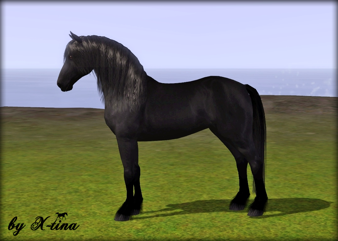 Friesian Horse by X-tina