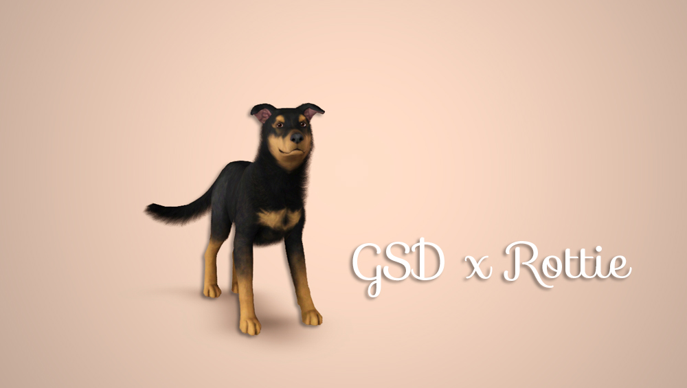 GSD x Rottweiler Cross by Morganabananasims