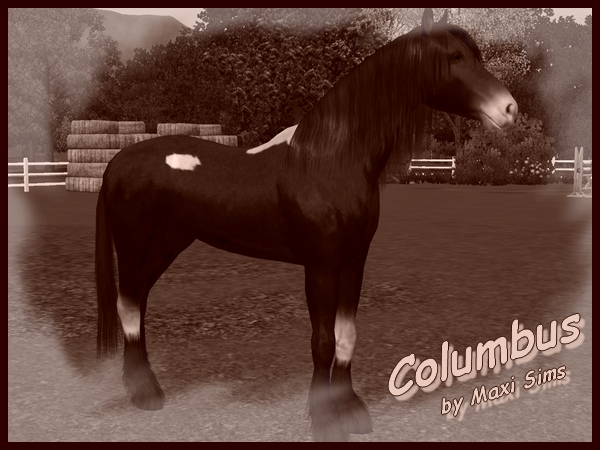 Arabian stallion Columbus by Maxi Sims