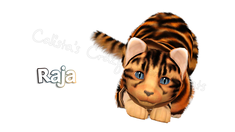 Cat Request Raja by Calista