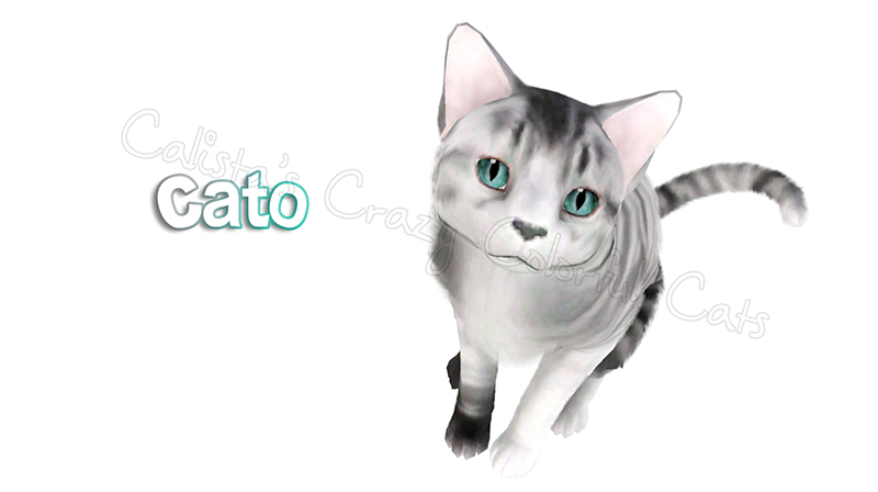 Cato cat request by Catlover800