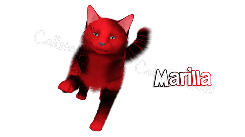 Marilla cat by Catlover800