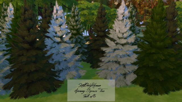 Norway Spruce Tree Pack of 5 by Kitonlyhuman