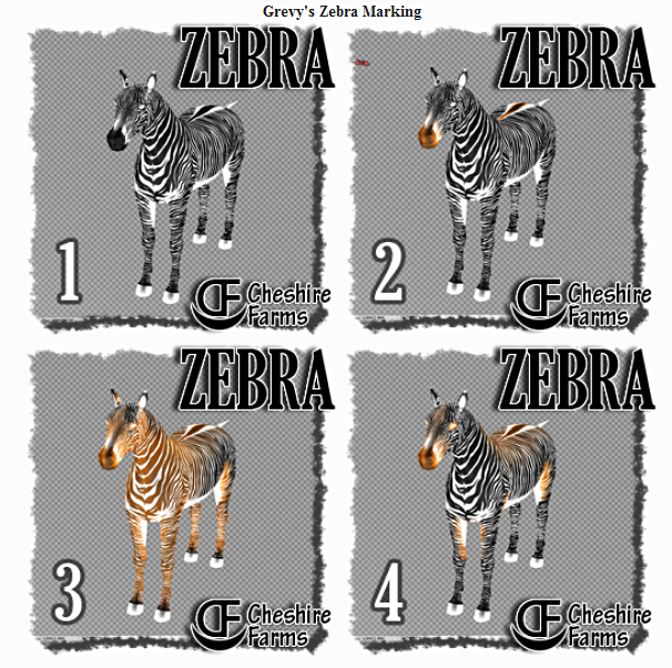 Grevy's Zebra Full-body Markings by Farai Borde