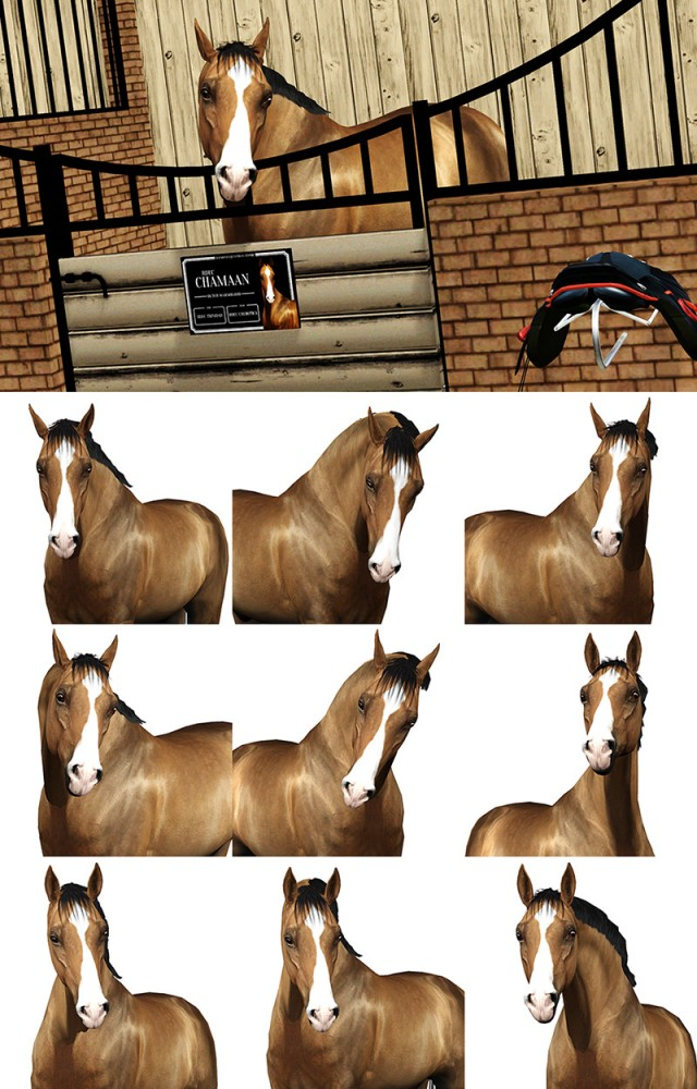 9 poses to capture your pons in their stalls by Raymond Equestrian Centre