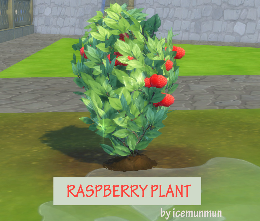 Harvestable Raspberry Plant by icemunmun