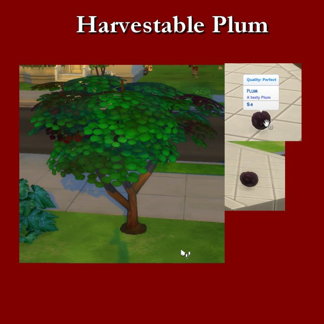 Harvestable Plum by Leniad