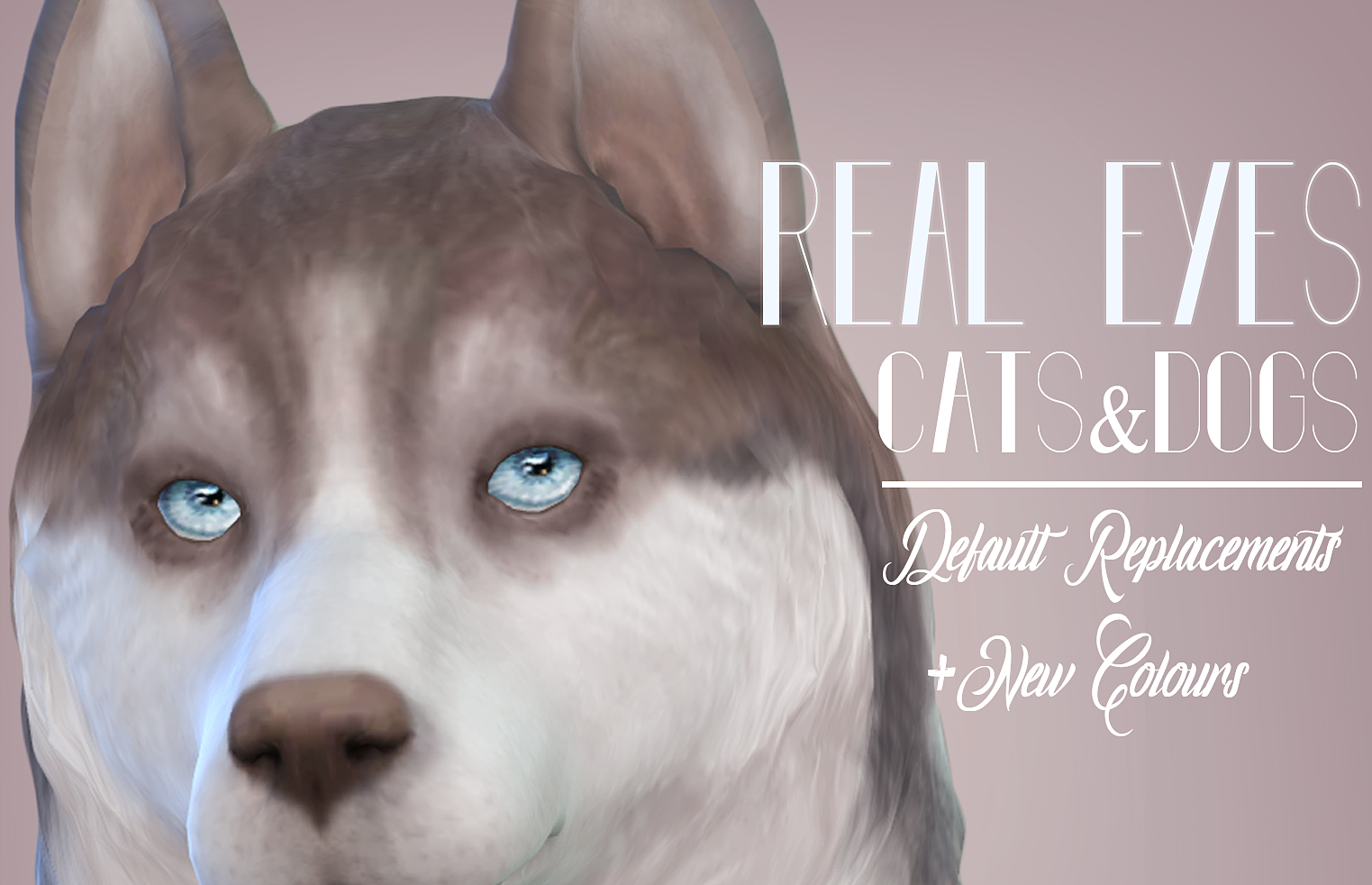 Real Eyes  Cats and Dogs by kellyhb5