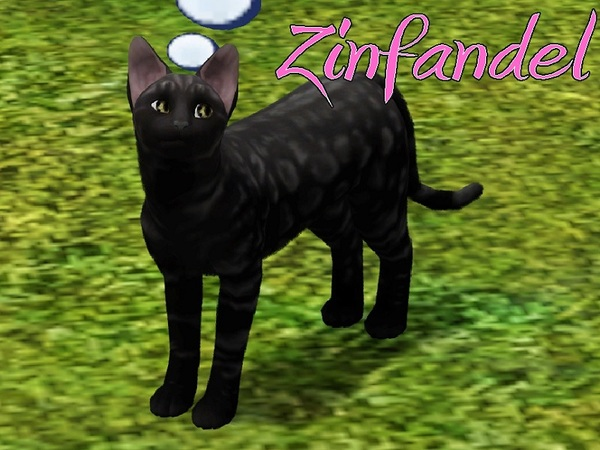 Zinfandel Cat by MissMoonshadow