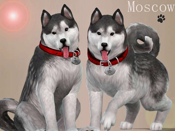 Moscow the Husky [PETS NEEDED] by Margeh-75