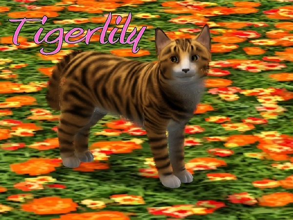 Tigerlily Cat by MissMoonshadow