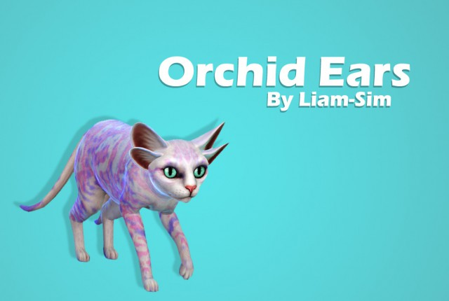 Orchid Ears by Liam-Sim